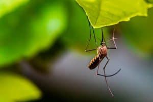 Piqûres de moustiques en été : ces astuces incroyables vont vraiment changer votre quotidien !